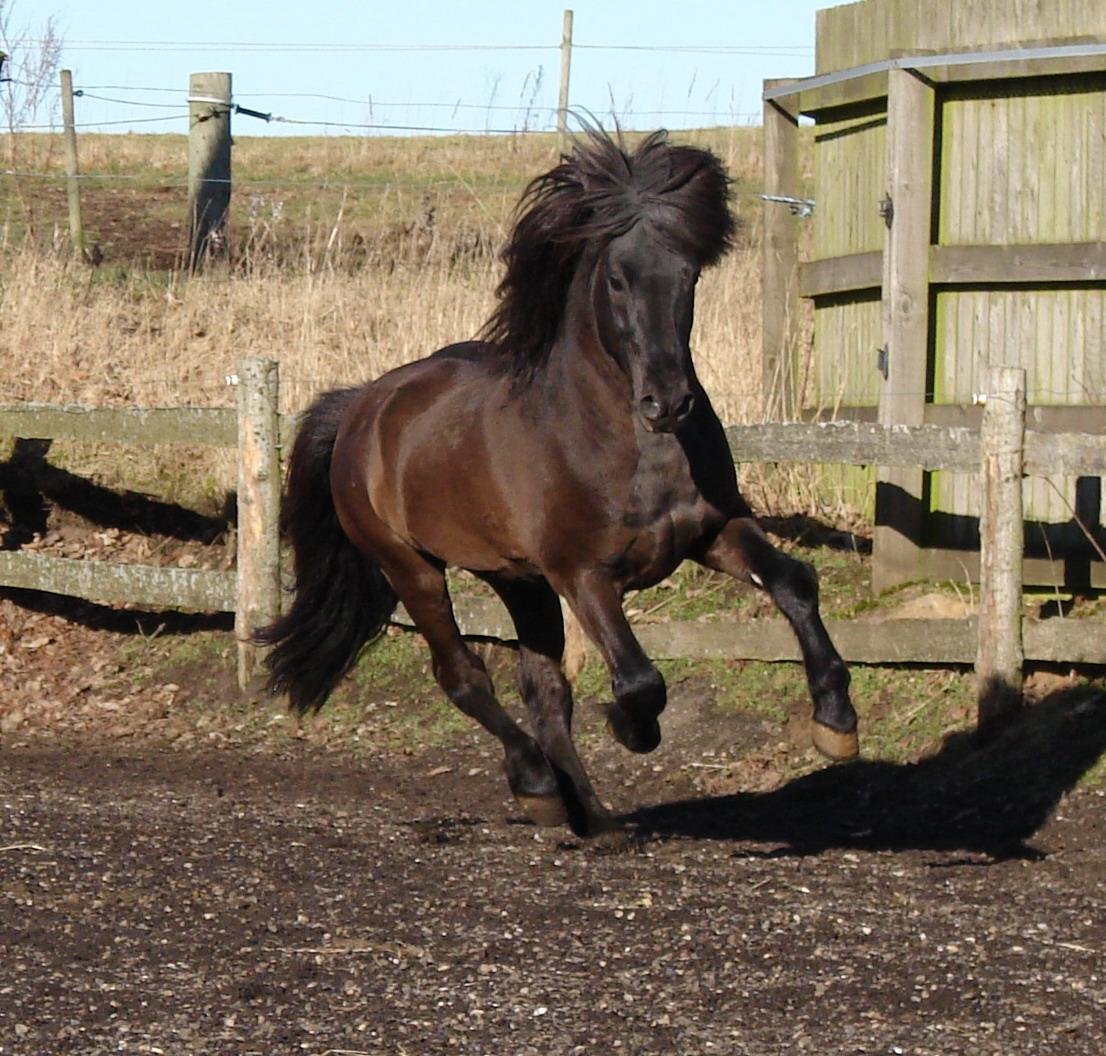 bedækning hest